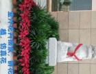 各种盆栽花卉销售,花卉、绿植租赁租摆,会议会展布置