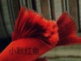 纹路清晰细腻鱼体活泼可爱