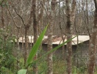 410亩橡胶林转让