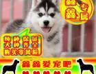 北京买哈士奇幼犬 最好品质 签订协议 来场可看狗父母