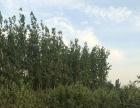 沧州市吴桥县100亩林地低价转让