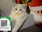 天津哪里有布偶猫出售 天津布偶猫价格 天津宠物猫转让出售