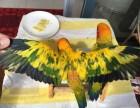 转让大绯胸鹦鹉 小太阳鹦鹉 吸蜜鹦鹉 越南鹩哥