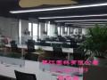 龙华坂田大浪应人石街道办办公室租花绿植租摆 首选琴江园林