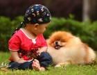 广州哪里有卖博美犬 广州哪里有狗场