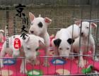 郑州有卖牛头梗的吗