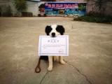 請問北京哪個寵物學校好一些 北京哪個寵物學校好