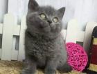 哪里出售纯种蓝猫纯种的蓝猫多少钱一只