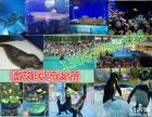 海狮表演出租 海豹租赁 企鹅展览