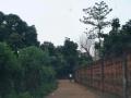 内树园 土地 343平米