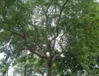 广东范围收购树木