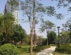 租房选怀德公园,欧式风格,全新品牌家私电器,新园林,朝南