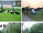 湛江狗场做齐疫苗保健康萨摩 自家繁殖纯种萨摩犬