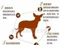 靓贝肠胃舒系列,改善狗狗肠胃的高档狗粮
