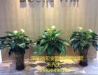 深圳绿植租摆售卖,专业设计定期维护,绿植墙设计,园林绿化