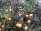 张家湾自然生态园自助烧烤 垂钓 中餐 枇杷樱桃采摘