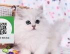 镇江哪里开猫舍卖金吉拉 去哪里可以买得到纯种金吉拉