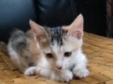 三猫免费领养,没时间养