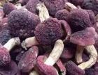 白木耳 茶树菇 香菇 猴头菇 竹荪 黑木耳产地批发