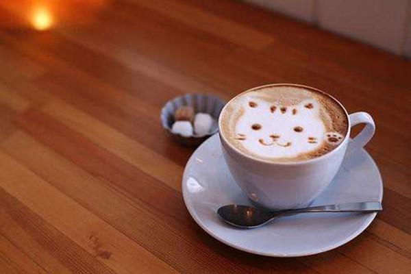 猫窝咖啡一家让你窝在慵懒的时光里的猫主题咖啡厅,加盟热线