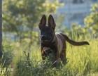 西安训狗-西安和谐犬只行为心理训练中心训犬
