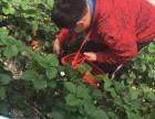春季 上海农家乐一日游 二日游推荐 赏?#19968;?#37319;草莓游海边