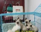 出售波斯猫金吉拉加菲猫折耳猫暹罗猫蓝猫短毛猫等品种