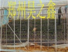 昊之鑫温室大棚建设
