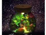 苔藓微景观玻璃瓶 微盆景生态玻璃瓶DIY材料 可加灯玻璃瓶生态瓶