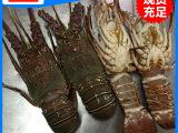 优质推荐 优质小龙虾 冷冻小龙虾 量大从