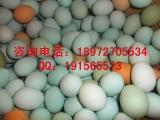 优质绿壳鸡蛋|土鸡蛋|柴鸡蛋|草鸡蛋,现