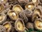 白云山自家种的干香菇,35元一斤,无腿肉厚