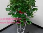 北京海淀区绿植租赁花卉销售公司