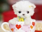 武汉那里有串串犬卖 武汉串串犬价格 武汉串串犬多少钱