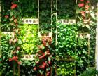 西安植物墙 形象墙设计施工