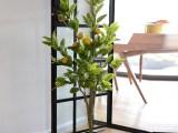 假盆栽植物摆设 室内装饰办公室花卉绿植 仿真柠檬树苗果树落地