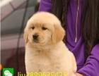 犬舍出售中型犬 金毛 啦啦 哈士奇 德牧 边牧包健康