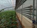 蔬菜温室大棚骨架棉被