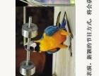 提供暖场观赏鸟展览租赁百鸟巡展出租各种百鸟园展览