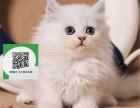 徐州哪里卖金吉拉 徐州哪里有宠物店 徐州哪里卖宠物猫便宜
