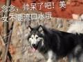 公园式寄宿 昆明汪民宠物公园 大型游泳 专业犬培训