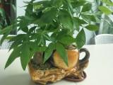 东莞茶山绿植租摆,植物租赁,汇安园艺花卉出租