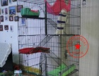 猫笼子 折叠 大号六层别墅 加粗加密