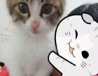 乖巧的小馋猫!迷糊