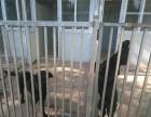 窦店猫狗长期寄养 十一寄养预订 单独寄养 可上门接送宠物