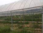 泉州惠安涂寨镇古山村74.77亩种植基地招租或合租