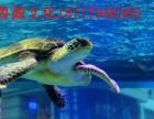 海狮表演出租企鹅展海洋展租赁公司