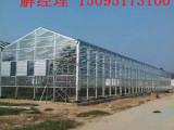 山东结实耐用的连栋温室大棚——玻璃温室大棚材料