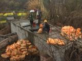 龙泉驿区大面镇专业管道疏通清淤,专业蛙人潜水安装清理堵头