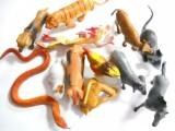正品塑胶软体十二生肖动物模型玩具 12生肖模型鼠牛虎兔龙蛇马